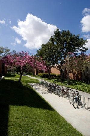 Walkway on campus with bicycles