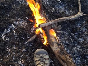 Savannah Fire