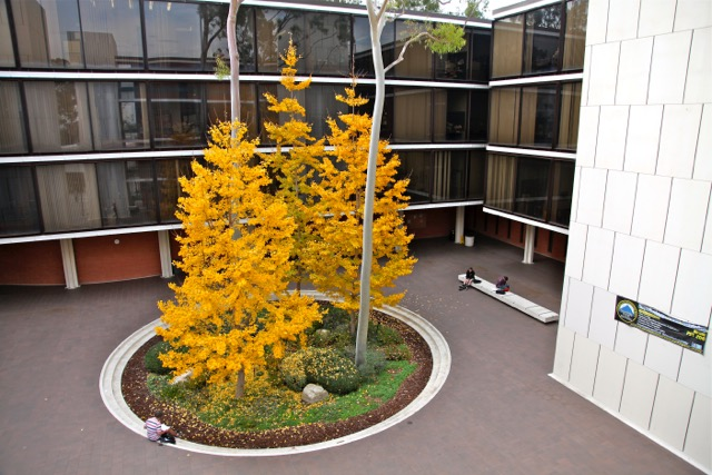 Tree in Psychology Courtyard